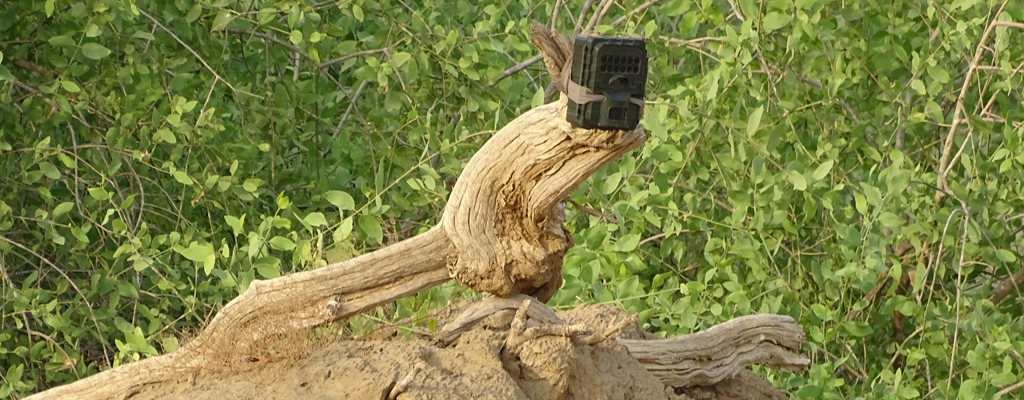 Infrared Camera Used in Wildlife Survey in Jizan
